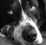 Ujatoba_cachorro_deitado