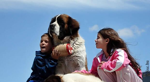 Ujatoba_animais_criancas