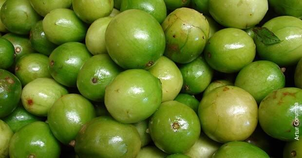 Ujatoba_frutas