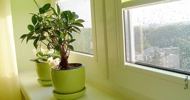 Ujatoba_plantas_casa