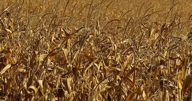 Ujatoba_agricultura_seca