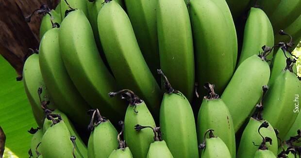 Ujatoba_banana_verde
