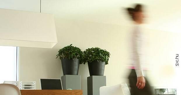 Ujatoba_plantas_casa_Sxc11