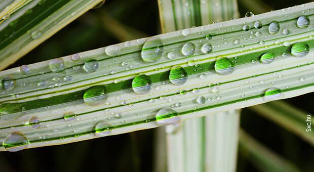 Ujatoba_planta_agua
