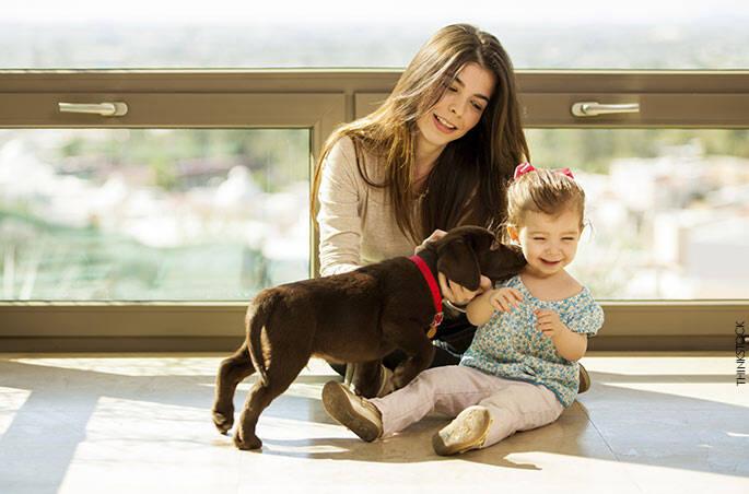 6 . Contato com animais de estimação