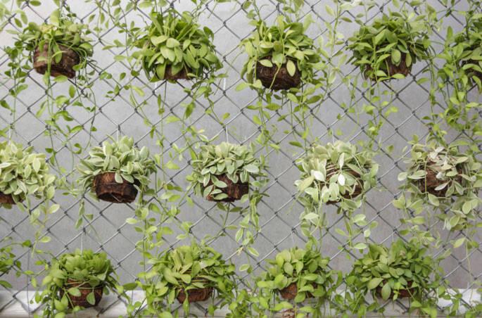 jardim vertical minhocao:universo-jatoba-jardim-vertical