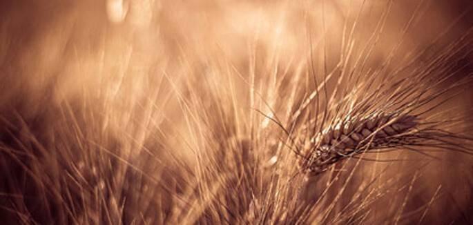 universo-jatoba-agricultura-ecod